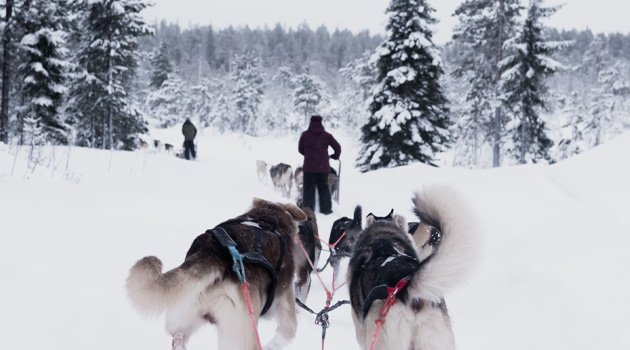 Husky Sledding Meribel